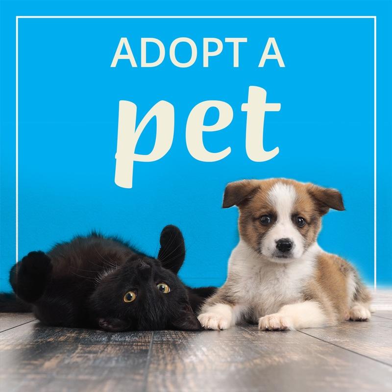 Pet+Adoption